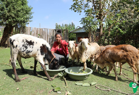 Ms. Abaynesh with her livestock asset, photo credit to TAAT Communication Unit