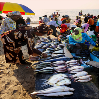 According to the Marine Stewardship Council, about 1 billion people - largely in developing countries - rely on fish as their primary animal protein source.